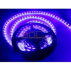 Ruban led bleu indigo 440 nm 24V